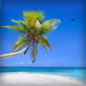 349 Weeklong Resort Stays
